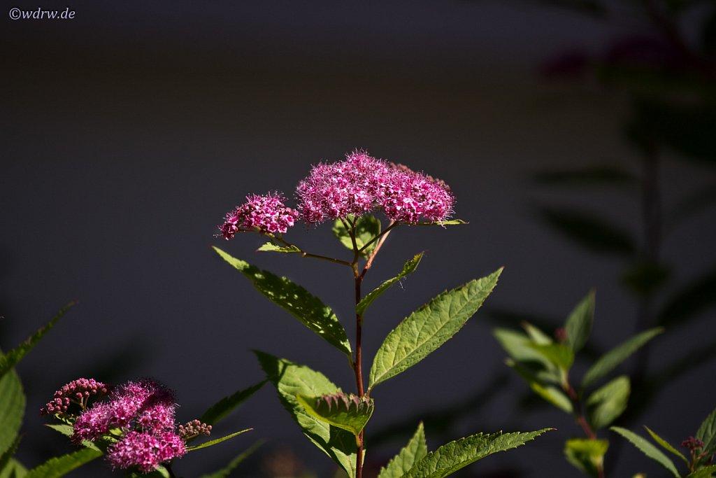 Pflanze im heimischen Garten