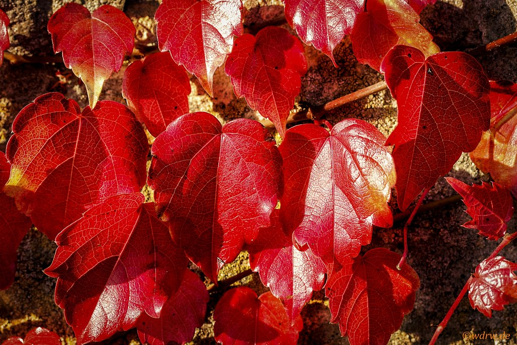 Herbstfarben Friedhof