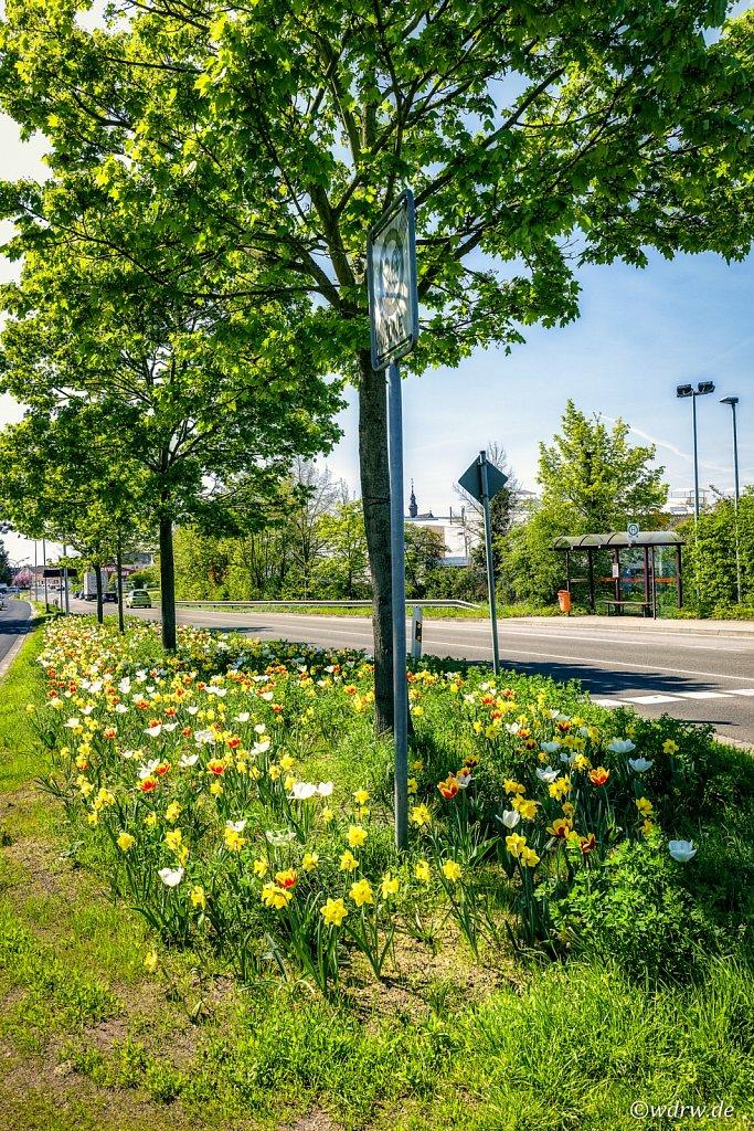 Tulpenfeld Bingerstrasse